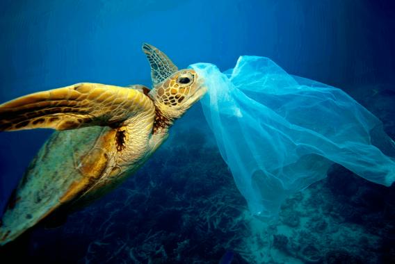Dia do Meio Ambiente: Combate a poluição plástica